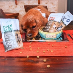 Your Pets Will Dig This Organic Food From Recycled Bags